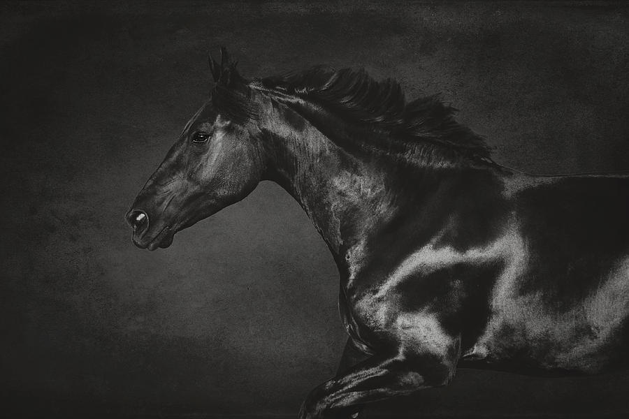 black and white fine art photography tutorial